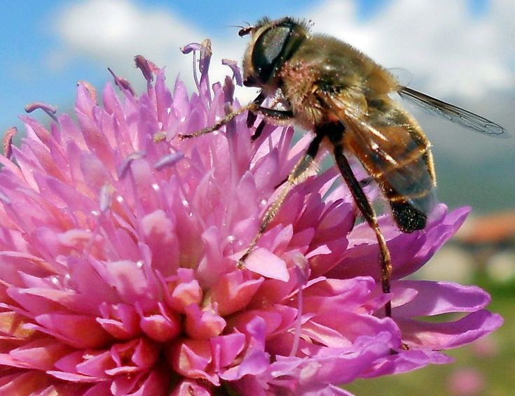 Bee at work by marilenavaccarini