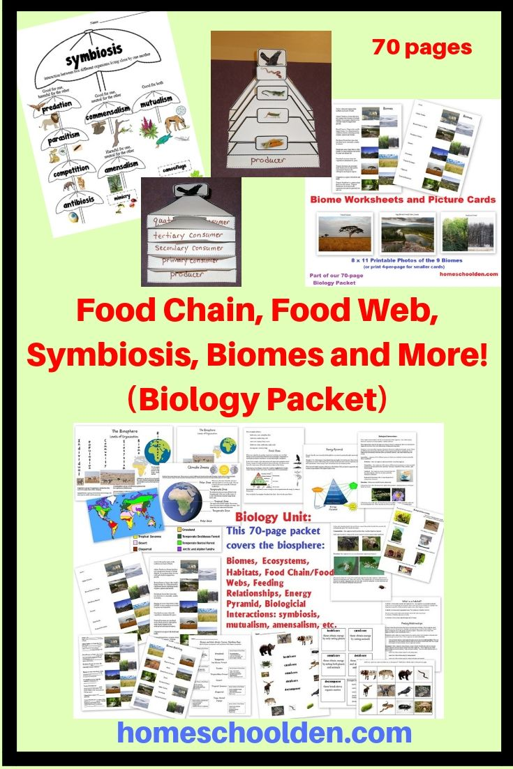Food Chain Food Web Symbiosis Biomes Biology Packet Food Chain Homeschool Science Curriculum Food Web [ 1102 x 735 Pixel ]