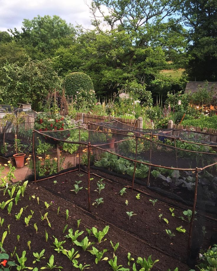 408 best Potager - The Traditional Kitchen Garden images on ...