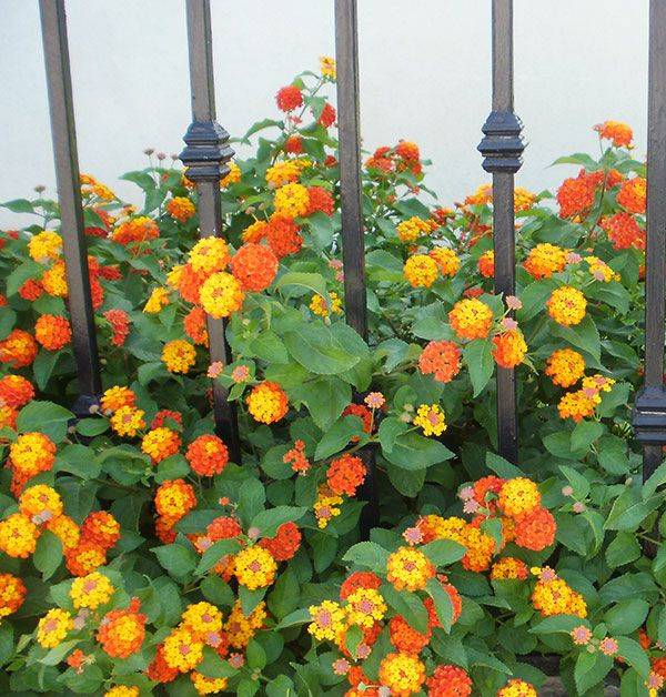 17 Best Images About Pictures From Flower-Garden-Design.Com On