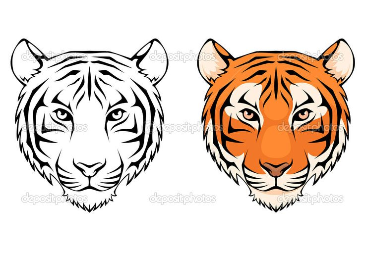 Line Drawing Of A Tiger S Face : Best images about tiger siluets graphic tatoo on