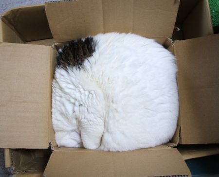 Square cat #Funny #Cats #LOLcats