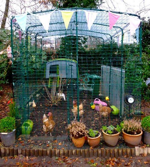 Mejores 70 im genes de chicken coops garden enclosures for Gallinero jardin