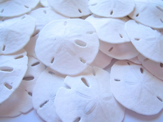 "3-3.5"" Sand Dollar-quantity 1-Sand Dollar-Beach Wedding Decor-Beach Wedding Favors-Sea Life Decor-Sand Dollar Decor-Real Sand Dollar-Shells"
