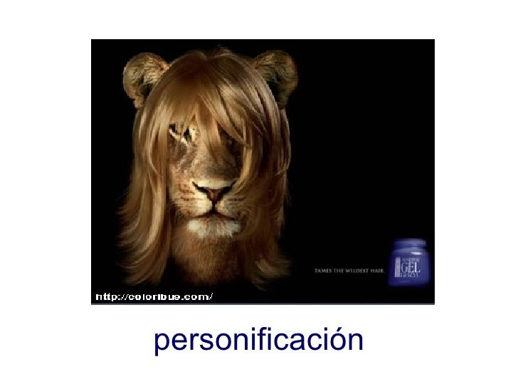 un león que con el gel que se ha comprado le ha salido pelo como ha una mujer