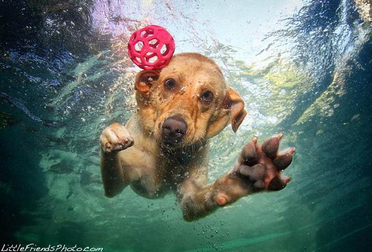 Подводные фото Сета Кастила. Собаки в погоне за мячом