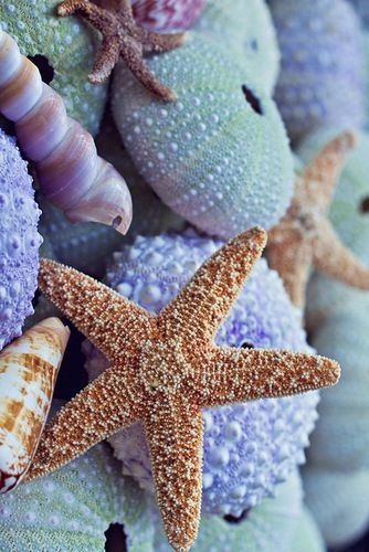 Beach...echinoderms!!! Love the blues, greens, tan color combo for the beach