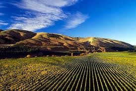Martinborough, NZ. Hang out here for two days at the Tora Tora Tora music festival http://www.dashtickets.co.nz/event/rwxd90vg7