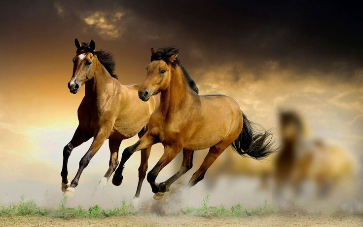 Running Horse Pictures Hd