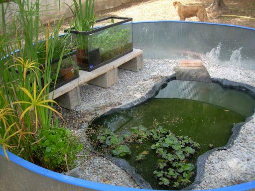 Las 25 mejores ideas sobre acuario para tortugas en for Acuario tortugas