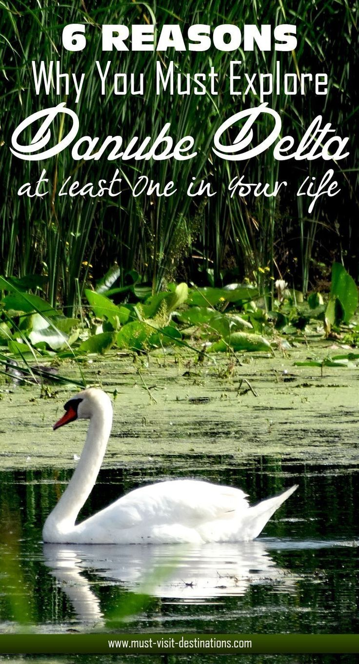 6 Reasons Why You Must Explore Danube Delta at Least Once in Your Life  #Danube #travel
