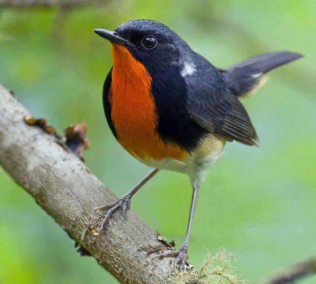 Rare Species Of Birds 132 best images...