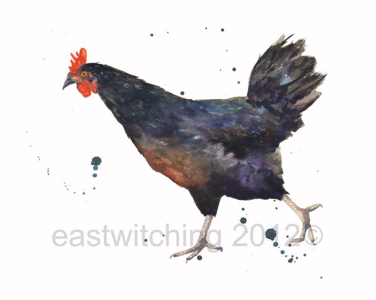 WATERCOLOR Chicken print, 8x10 print, watercolor,country kitchen, HEN Watercolor, chicken art by eastwitching on Etsy https://www.etsy.com/uk/listing/110406289/watercolor-chicken-print-8x10-print