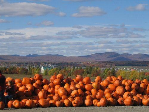 Citrouilles sur l'Île d'Orléans en automne / Pumpkins on l'Ile D'Orleans in automn