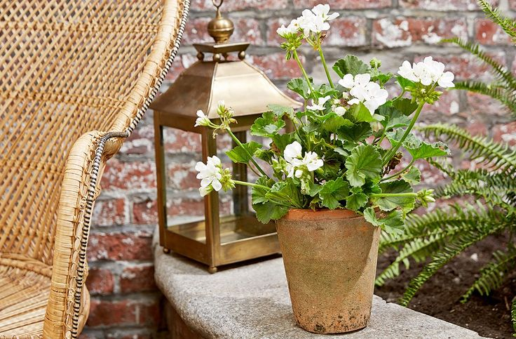 Gardening Ideas: Plants that Repel Mosquitoes —One Kings Lane