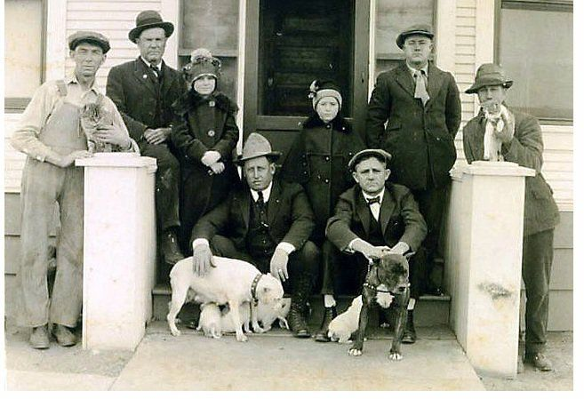 Pit bulls were the most popular family dog in America up through and after WWII They were known as Americas Dog...a symbol of strength and friendliness