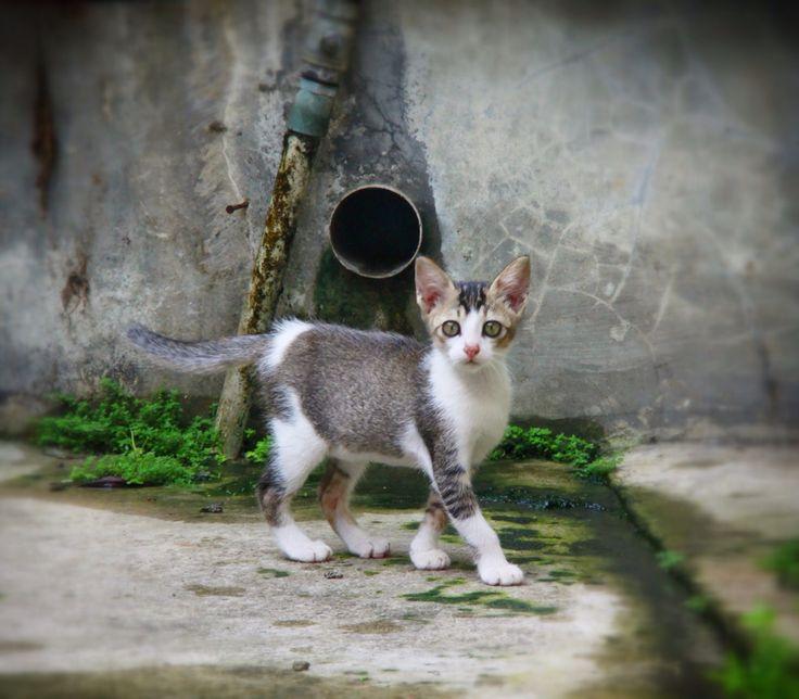 Cat Walk @mojo__cat