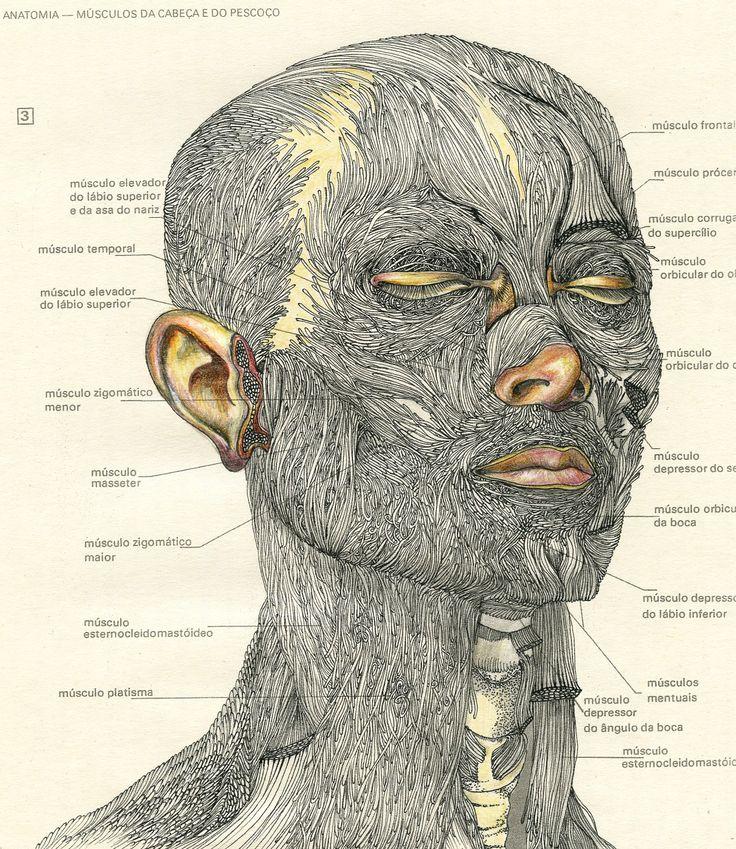 Da cabeça e pescoço; 2014   23 cm X 21 cm pen and pencil over paper