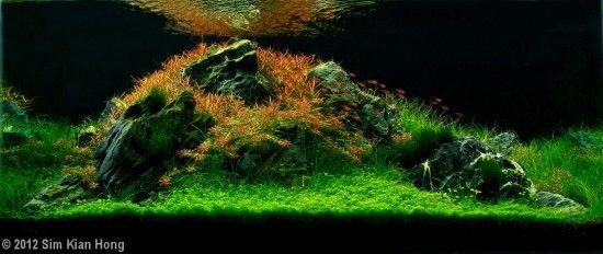 2012 AGA Aquascaping 대회 수초어항 입니다.. 역쉬 수초어항 !! : 네이버 블로그
