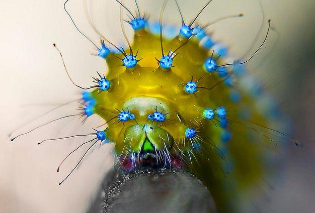 Weird & Crazy Caterpillars | The Featured Creature: Showcasing Unique and Unusual Wildlife