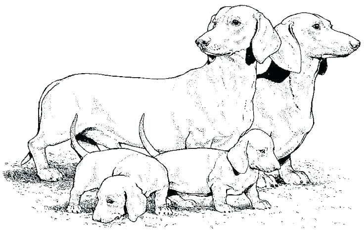 Dachshund Coloring Pages Dog Coloring Page Horse Coloring Pages