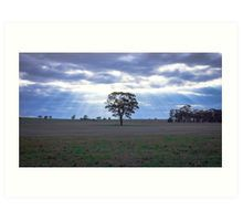 Lone Tree and a Curtain of Sunrays - Boort, Victoria Art Print