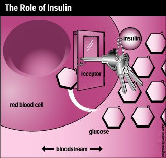 The Science Behind Carbohydrates and Insulin, and How They Control Body Weight