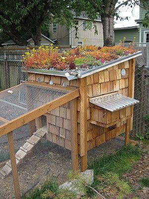 "A ""Wow Factor"" like flowers on your Hen House Roof! Very Interesting! #BackyardChickens www.FreeHenHousePlans.weebly.com"
