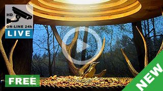 Karmnik dla ptaków w lesie na Podkarpaciu