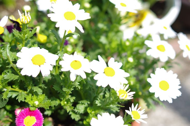 カワイイお花☆ #flower