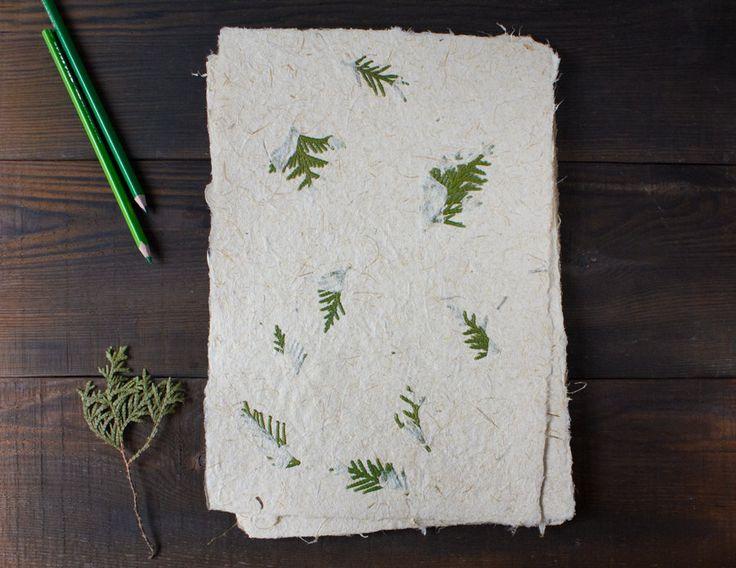 Vel (prijzen per 1 vel).  Decoratief papier, die is gemaakt van cannabis gebleekte vezels en reed vezels en versierd met thuya bladeren. De bladen zijn dicht, met een ruw oppervlak, en hebben een prachtig patroon van donkere en lichte vezels. Het is perfect voor decoratie, handwerk wenskaarten, enz. Het papier is gemaakt van 50% riet stengels, 50% cannabis vezels. Geschatte bevolkingsdichtheid van papier is 238 g/m2.  Het papier ruikt aangenaam naar kruiden. De bladen hebben deckle rand...
