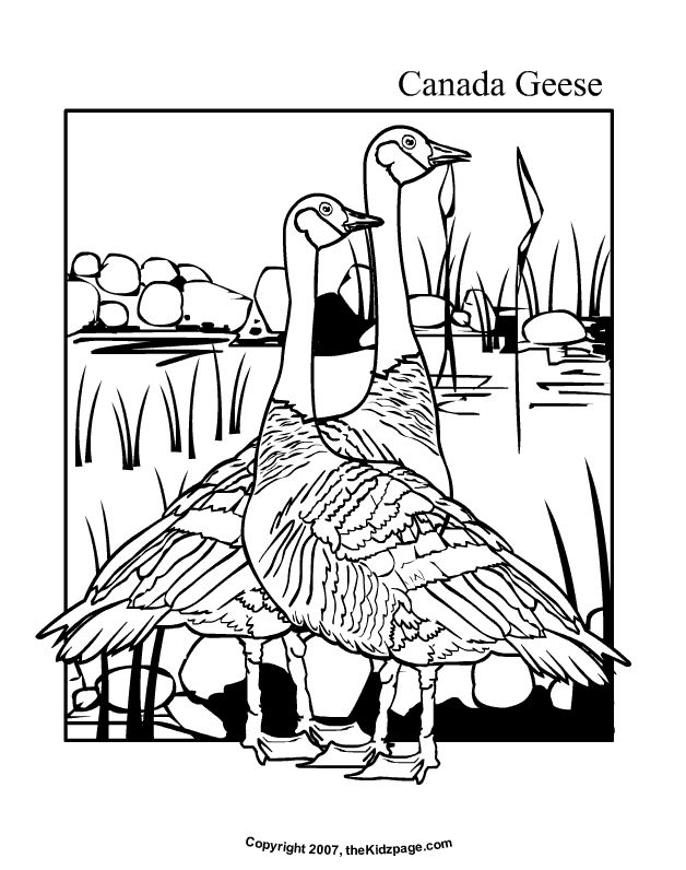 Canada Geese Free Coloring Pages for Kids - Printable Colouring Sheets