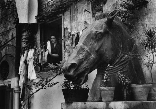Head of a Greek horse in the Via Trbunale, Naples   Herbert List, 1959