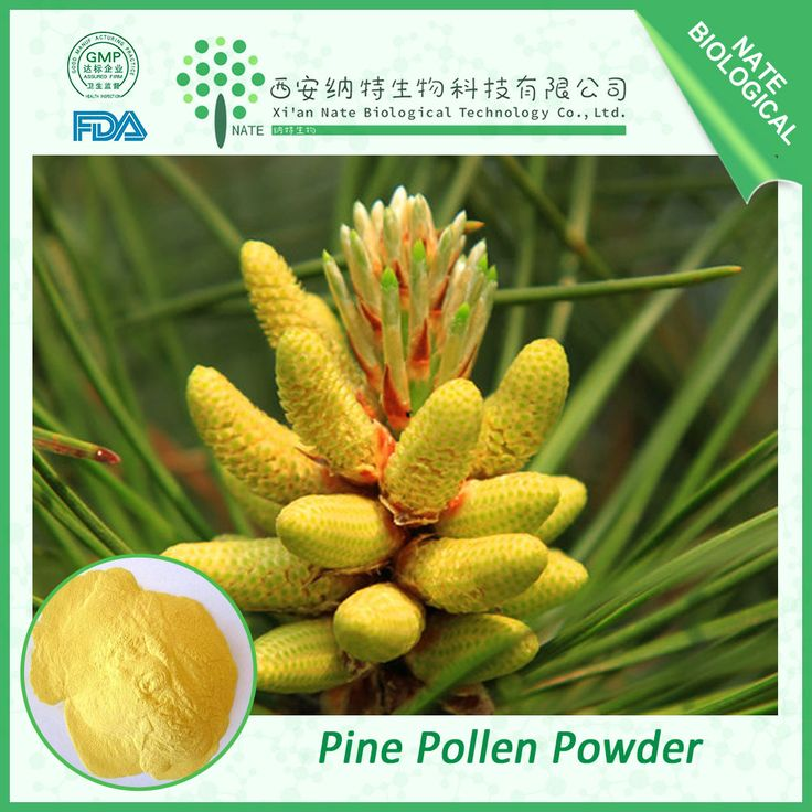 Cell wall broken bulk Pine Pollen Powder http://www.natesw.com/product/277390573