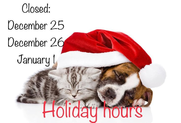 Please take note of our upcoming holiday hours. If your pet is on life long or life saving medications or a prescription diet please ensure you have enough on hand to get through the holidays. Happy holidays from all the staff at Harbour City Animal Hospital!! If you have an emergency and we are closed please phone Central Island Veterinary Emergency Hospital at 250-933-0913. #veterinarian #nanaimo #harbourcityvet #holidays2017