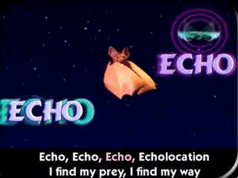 If you were wondering if bats have any unique biological abilities, look no further than the echolocation song to educate yourself.