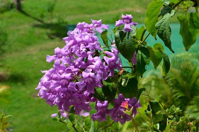 Flores de todos los colores, formas y olores embellecen nuestra #HosteriaMarySol en la isla de San Andrés, Colombia :D flowers  :D