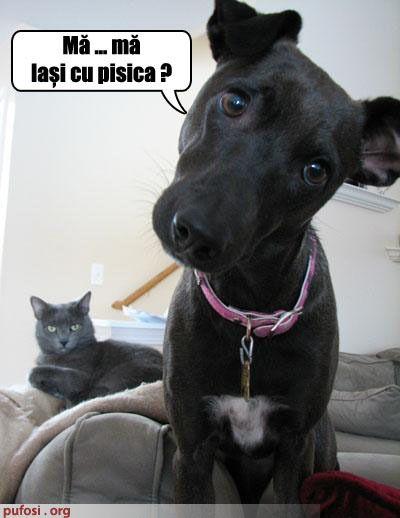 poze-amuzante-cainelui-ii-este-frica-de-pisica - Animale haioase