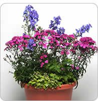 Container ideas for flower combinations
