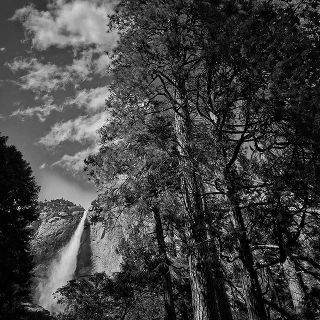 Photo by David Guttenfelder @dguttenfelder. Clouds float above Yosemite Falls inside Yosemite National park, as park goers await the arrival of US President Obama. This weekend President Obama will arrive in Yosemite with his family, where they will spend Father's Day weekend. 2016 marks the 100th Anniversary of the National Park Service.  For more coverage of this Presidential visit follow along here on Instagram, National Geographic's Facebook page, and @dguttenfelder