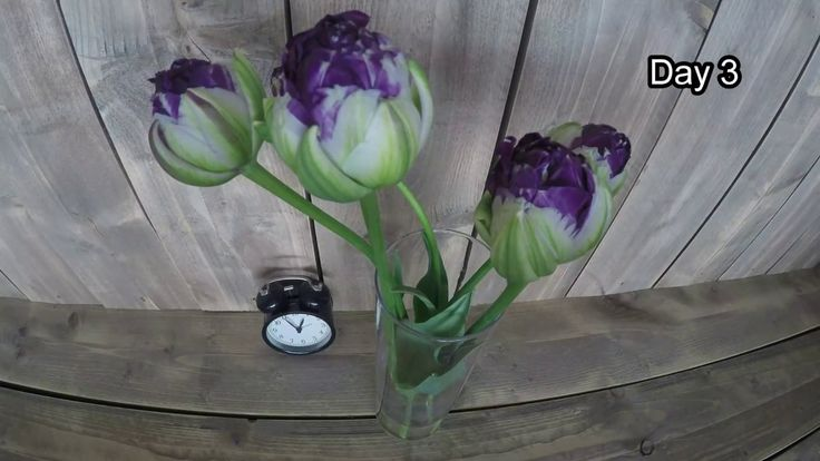 Tulip Blue WoW time lapse!