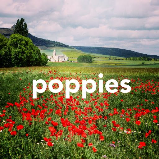 Camino Poppies - Mark Squires