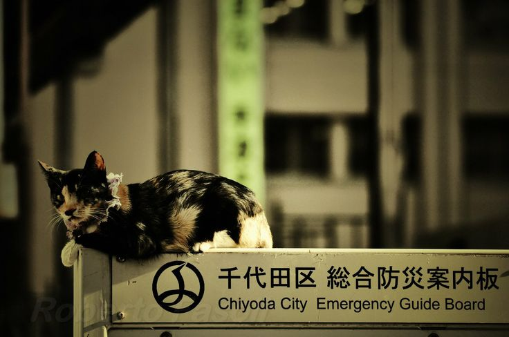 Tokyo - Akihabara - Cat