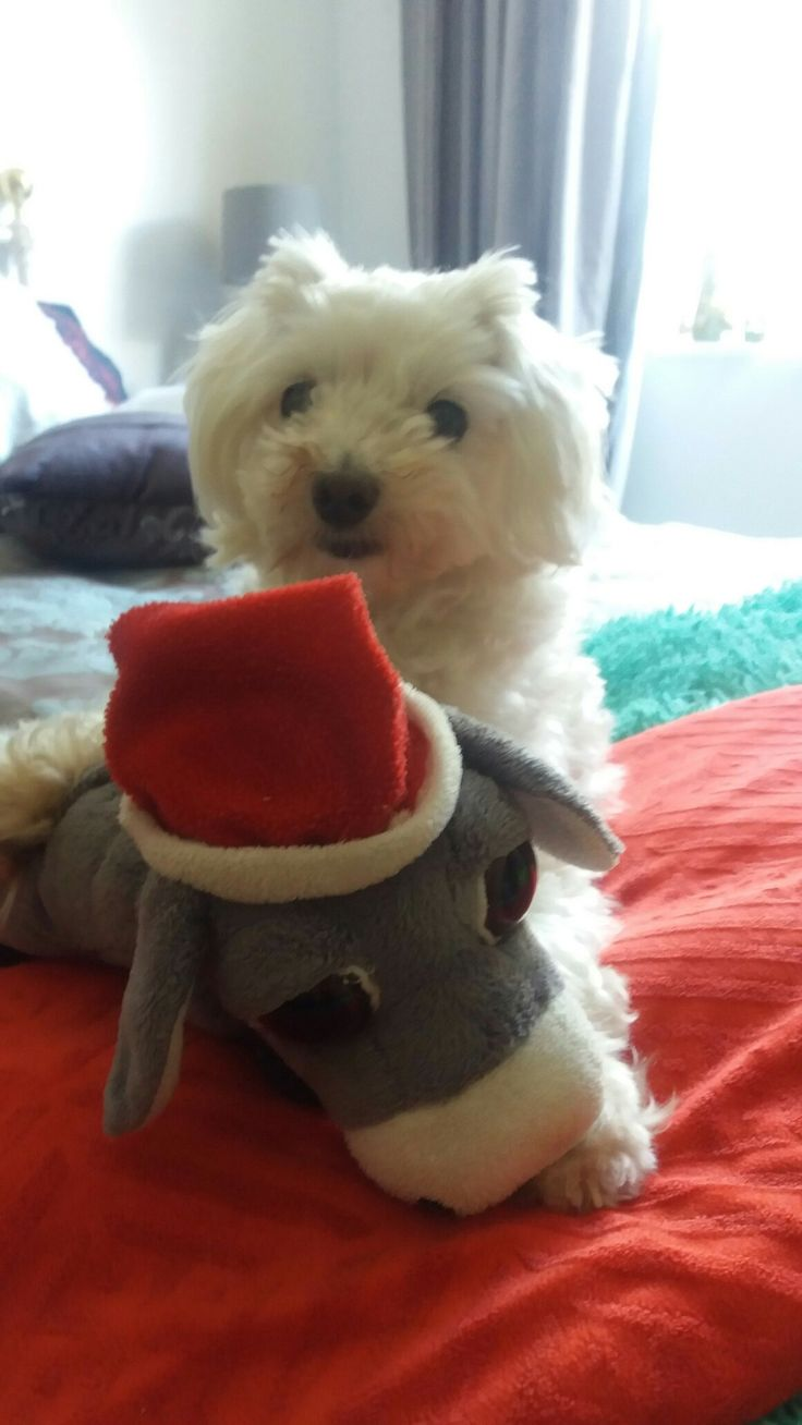Wooky Willows favourite toy his donkey.