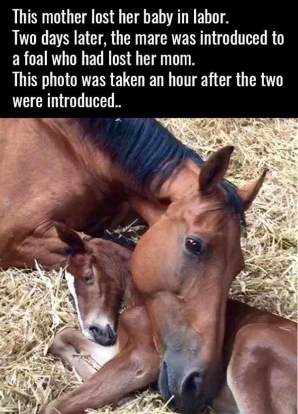 This mare who lost her foal in labor adopted an orphan foal a few days later.