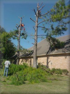 Carrollton, Texas – Martinez Tree Service – Tree Services, Lawn Maintenance & Landscaping #martinez #tree #service, #flowers, #landscape, #landscaping, #tree #service, #sod #installation, #lawn #service, #tree #planting, #stump #removal, #stump #grinding, #handyman #services, #tree #services, #tree #trees, #professional #tree #service, #tree #trimming, #tree #pruning, #tree #removal, #grass #planting, #tree #specialist, #residential, #professional #tree #services, #commercial, #lawns…