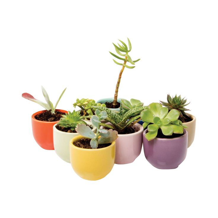 Coddle your favorite assortment of succulents in this charming set of Chandler Cup Planters. With their classic rounded shape, these lovely plant holders will feel at home in both chic transitional and...  Find the 9-Pc. Chandler Cup Planter Set, as seen in the Bohemian Summer Solstice Collection at http://dotandbo.com/collections/bohemian-summer-solstice?utm_source=pinterest&utm_medium=organic&db_sku=120235