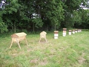 How to start natural beekeeping- for free: Beekeepingfor Free, Bees Hives, Natural Beekeeping, Natural Bees, Tops Bar, Fruit Trees, Bar Hives, Start Natural, Honey Bees