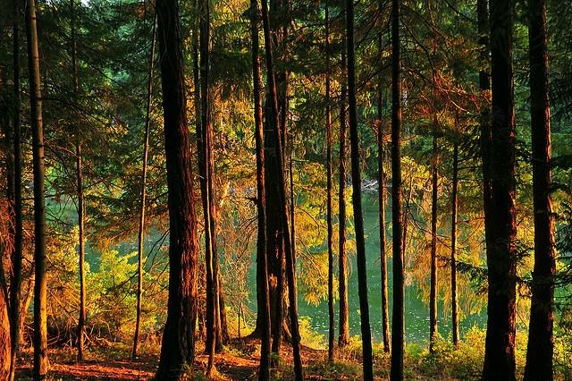 -Summer Enchantment Galiano Island BC by Ireena Eleonora Worthy, via FlickrGaliano Islands, Bc Canada, Summer Enchanted, Enchanted Galiano, Beautiful Places, Awesome Art, Eleonora Worthy, Islands Bc, Ireena Eleonora