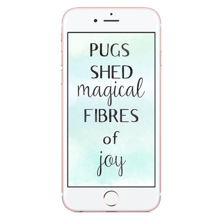 Phone Wallpaper   Pugs Shed Magical Fibres of Joy http://www.thepugdiary.com/phone-wallpaper-pugs-shed-magical-fibres-of-joy/